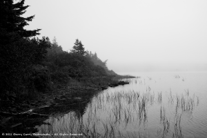 Foggy Shore - Churchills Lake.png